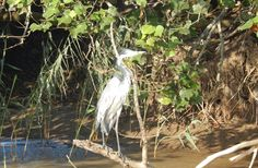 Crocodiles, Kingfisher, Bird Species, Cruises, Boat, Dinghy, Crocodile, Common Kingfisher, Boats