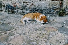 Tuscan, Italy   gabrielaprias Vsco, Corgi, Italy, Animals, Corgis, Italia, Animales, Animaux, Animal