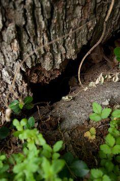 Appleseed Tree Service