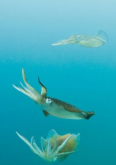 squiddles.