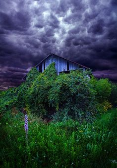 A forgotten barn being swallowed by nature. Beautiful picture. Love the sky!