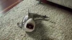 Baby shark can't stop laughing! 😂 😂 😂 😍 Happy and smiling baby shark 🦈🦈🦈 Funny Animal Memes, Funny Animal Videos, Funny Animal Pictures, Funny Videos, Cute Little Animals, Cute Funny Animals, Cute Baby Videos, Cool Inventions, Cute Babies