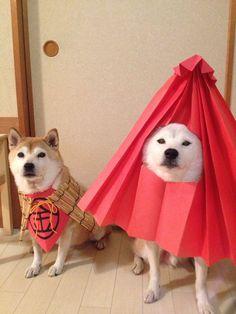 Tumblr: darylfranz:    柴犬の妖怪写真が可愛すぎるwwwwwwwwwwwwww - ハムスター速報