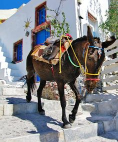 GREECE CHANNEL | #Donkey ride in #Santorini! You must add this to your to do list for #Greece! http://www.greece-channel.com/