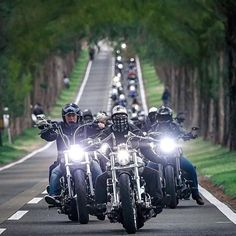 "biker on Twitter: ""… "" Motorbike Girl, Motorcycle Clubs, Baggers, Choppers, Harley Bikes, Harley Davidson Bikes, Audi Tt, Ford Gt, Volvo"