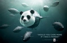 """WWF BlueFin Tuna overfishing: Panda """"Would you care more if I was a Panda?"""" The bluefin Tuna fish are being fished to extinction. Social Advertising, Creative Advertising, Print Advertising, Advertising Campaign, Ads Creative, Social Campaign, Advertising Ideas, Creative Pictures, Creative People"""