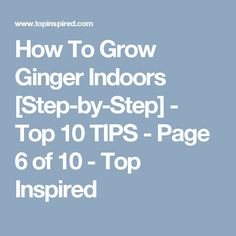How To Grow Ginger Indoors [Step-by-Step] - Top 10 TIPS - Page 6 of 10 - Top Inspired