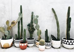 Highlights of the week — holly young – Cactus Ideen