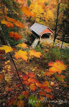 gorgeous! covered bridge surrounded by the beautiful fall foliage