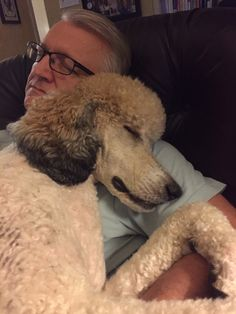 Poodle love. This is what I adore about standard poodles.  They are the cuddliest of dogs, my Riley included :)