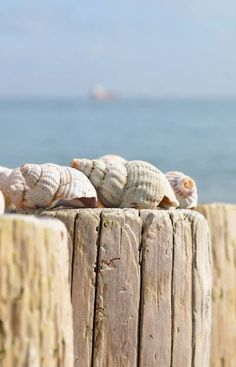 Beach - Weathered sea shells on a pier at the beach on a hot summer day (blue, brown cream) Playa Beach, Beach Bum, Summer Beach, Cottages By The Sea, Beach Cottages, Cap Martin, I Love The Beach, Am Meer, Sea Shells
