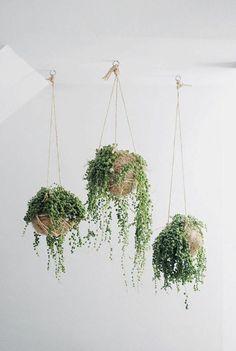 hängende zimmerpflanzen pflanzenampel topfpflanzen