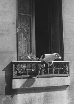 André Kertész      Le chien concierge, Paris     1926