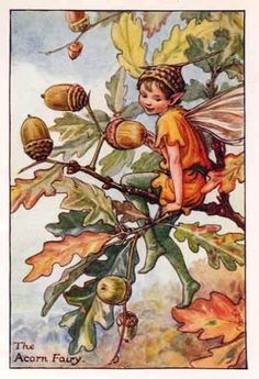 Acorn Fairy-Cicely Mary Barker - The Flower Fairies of the Autumn was first published in These prints are from First or early editions of this work. Each Flower Fairy print is accompanied with a copy of the poem authored by Cicely Mary Barker. Cicely Mary Barker, Flower Fairies, Decoupage, Autumn Fairy, Vintage Fairies, Vintage Art, Vintage Flowers, Vintage Prints, Fairy Pictures