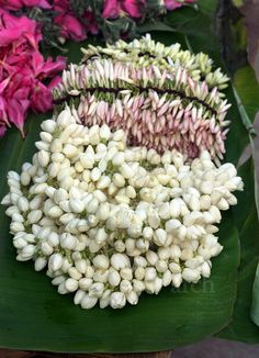 The smell of Mogra flowers