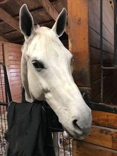 Cute Horses, Beautiful Horses, Dream Stables, Horse Stalls, Horse Sculpture, Farm Yard, Horse Girl, Horse Stuff, Farm Life