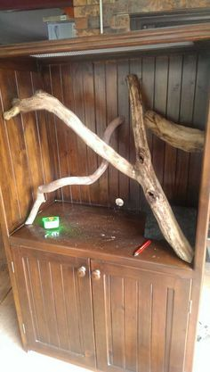 Post with 23417 views. TV Cabinet to Snake Tank Tree Frog Terrarium, Snake Terrarium, Terrarium Diy, Reptile Room, Reptile Cage, Crested Gecko Care, Pet Tarantula, Snake Cages, Snake Enclosure