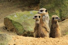 Strange habits of South African animals – Blog – South African Tourism