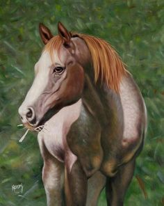 Horse Portraits, horse paintings, horse drawings........ #horseportraits #paint #painting #paintyourlife