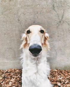 Nose!!!!