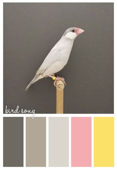 bird song. Note to self - Following Ann Erler's colour board