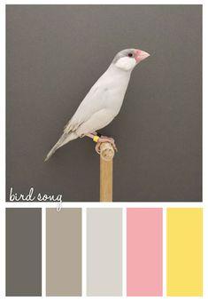 bird song. Note to self - Following Ann Erler's colour board