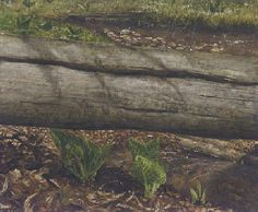 Jamie Wyeth (b. 1946)  Fallen Log  signed 'Jamie Wyeth' (lower right)  watercolor, gouache and ink on paper  14½ x 17 in. (36.8 x 43.2 cm.) ...