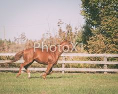 Stride of a horse Digital Download by PhotoX1 on Etsy Horse Photography, Horses, Digital, Etsy, Animals, Animais, Animales, Animaux, Horse Photos