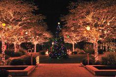 Botanical Gardens Largo, FL, Christmas Lights. Such a beautiful place, especially around the holidays.