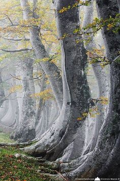 Ancient Forest, Abruzzo, Itália foto via donna.Is it just me, but I look at the base of the tree and imagine the tree's walking the earth!