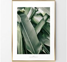 banana leaf photo/banana leaves print/botanical poster print/plant herb poster print/botanical poster/banana photohraphy print/banana leaf by BeautyOfPrints on Etsy https://www.etsy.com/listing/538500753/banana-leaf-photobanana-leaves