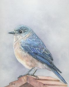 Bluebird Print 8 x 10 inches of watercolor painting 8 by 10 Birds Painting, Nature Prints, Animal Art, Bluebird Print, Art Inspiration Painting, Watercolor Bird, Original Watercolors, Realistic Paintings, Bird Art