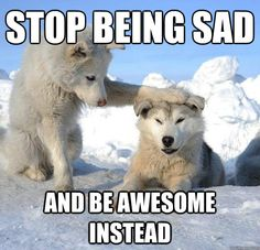 Stop being sad and be awesome instead - Caring Husky - quickmeme
