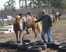 Desensitizing a horse to different environmental factors