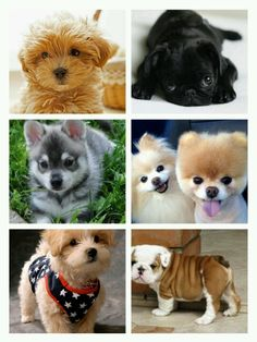 Lindos perritos!!