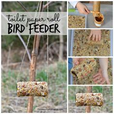 toilet paper roll bird feeders square