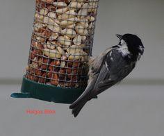 Fugler Bird Feeders, Birds, Outdoor Decor, Photography, Fotografie, Photography Business, Photo Shoot, Fotografia, Photoshoot