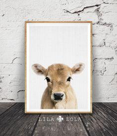 Calf Print, Baby Cow Farm Animal Wall Art, Nursery Decor, Large Printable Poster Digital Download, Farmhouse Decor, Colour Photo Babies Room by LILAxLOLA on Etsy https://www.etsy.com/listing/487086800/calf-print-baby-cow-farm-animal-wall-art