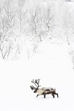 http://www.duskyswondersite.com/wp-content/uploads/2012/08/snow-and-ice-elk.jpg