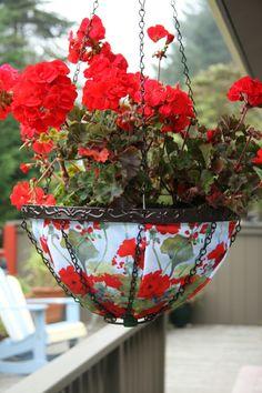 h ngepflanzen f r balkon welche pflanzen sind auf den balkon zu h ngen pflanzen pinterest. Black Bedroom Furniture Sets. Home Design Ideas