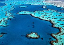 The Great Barrier Reef is one of the seven wonders of the natural world. What is the Great Barrier Reef? Australia Map, Australia Cairns, What Is Australia, Visit Australia, Hetalia Australia, Noosa Australia, Australia Wallpaper, Australia Tattoo, Sidney Australia
