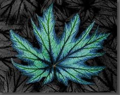 Blue Leaf Splendor