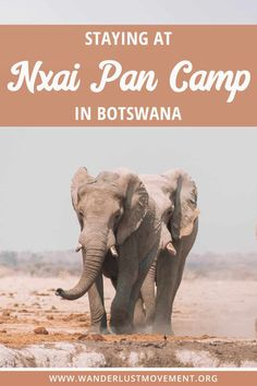 Staying at Nxai Pan Camp in Botswana Travel Vacation List Holiday Tour Trip Chobe National Park, National Parks, National Trust, Travel Guides, Travel Tips, Travel Advise, Koh Tao, African Safari, Africa Travel