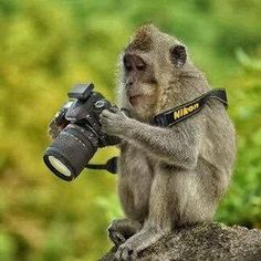"Note by the Paws-itive Pets: Our mommy Catherine loves the idea of getting wildlife to ""take photos"" with a camera. The photographer did a great photo here of this monkey with a Nikon camera (Nikon is the brand Catherine uses). Animals And Pets, Baby Animals, Funny Animals, Cute Animals, Wild Animals, Funny Pets, Comedy Wildlife Photography, Animal Photography, Better Photography"