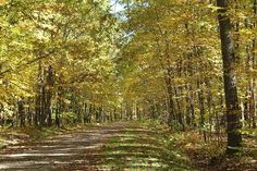 Rollway Horse campground, Hale Michigan
