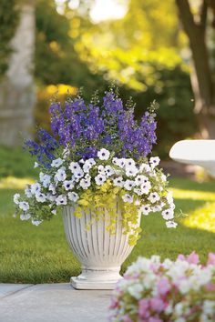'Newport Cottage' is a container combo that is sure to catch attention at a doorway or along a sidewalk.  http://emfl.us/7sId   #ProvenWinners