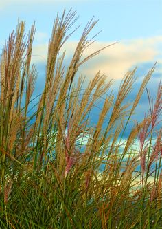 Above the city of Seattle, Jackie and Sam walk along a path and Sam whacks at the tall grasses as he passes.