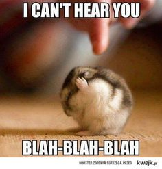 cute hamster This is for you Courtney Matthews ...........click here to find…