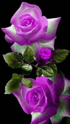 Range Home Decor Flowers Beautiful Flowers Wallpapers, Beautiful Rose Flowers, Exotic Flowers, Amazing Flowers, Pretty Flowers, Floral Wallpapers, Good Morning Beautiful Flowers, Lavender Roses, Purple Flowers