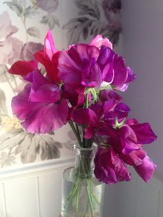 Sweet peas for the bathroom, 15th July